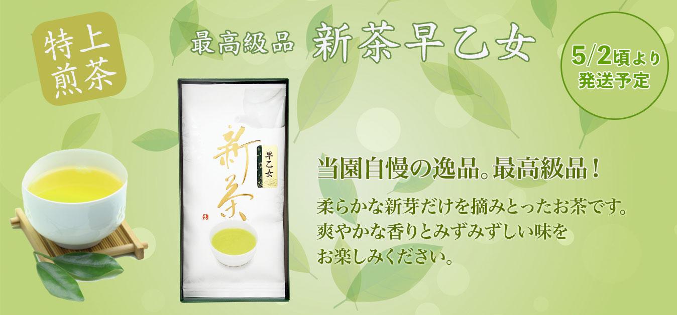2020年新茶 早乙女(静岡 牧之原)