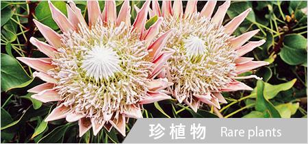 珍しい植物