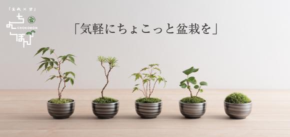 「気軽にちょこっとミニ盆栽を」