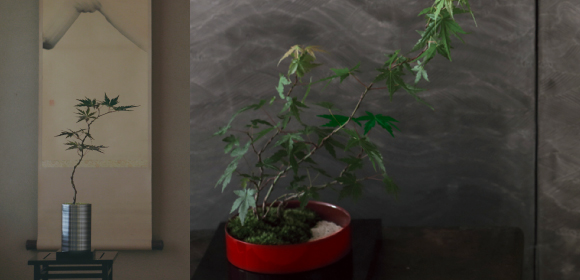 ミニ盆栽 BONSAI