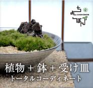 植物+鉢+受け皿トータルコーディネート
