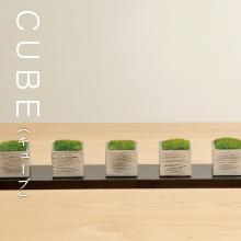 CUBE,ちょこぼん,ミニ盆栽,盆栽,おしゃれ,インテリア,雑貨.観葉植物,通販,販売,和,植物,苔,苔玉