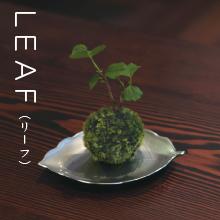 LEAF,ちょこぼん,ミニ盆栽,盆栽,おしゃれ,インテリア,雑貨.観葉植物,通販,販売,和,植物,苔,苔玉