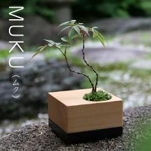 MUKU,ちょこぼん,ミニ盆栽,盆栽,おしゃれ,インテリア,雑貨.観葉植物,通販,販売,和,植物,苔,苔玉