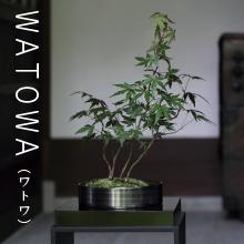 WATOWA,ちょこぼん,ミニ盆栽,盆栽,おしゃれ,インテリア,雑貨.観葉植物,通販,販売,和,植物,苔,苔玉