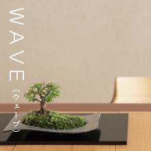 WAVE,ちょこぼん,ミニ盆栽,盆栽,おしゃれ,インテリア,雑貨.観葉植物,通販,販売,和,植物,苔,苔玉