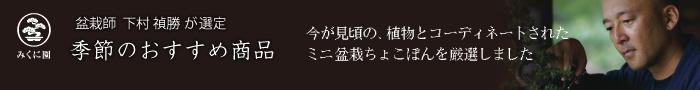 盆栽師 下村 禎勝が選定 季節のおすすめ商品 今が見頃の、植物とコーディネートされたミニ盆栽ちょこぼんを厳選しました