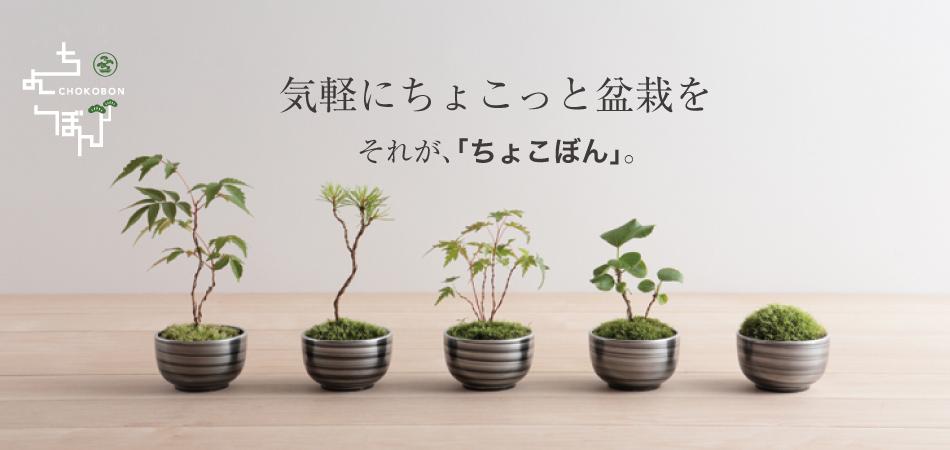 気軽にちょこっと盆栽を。それが「ちょこぼん」