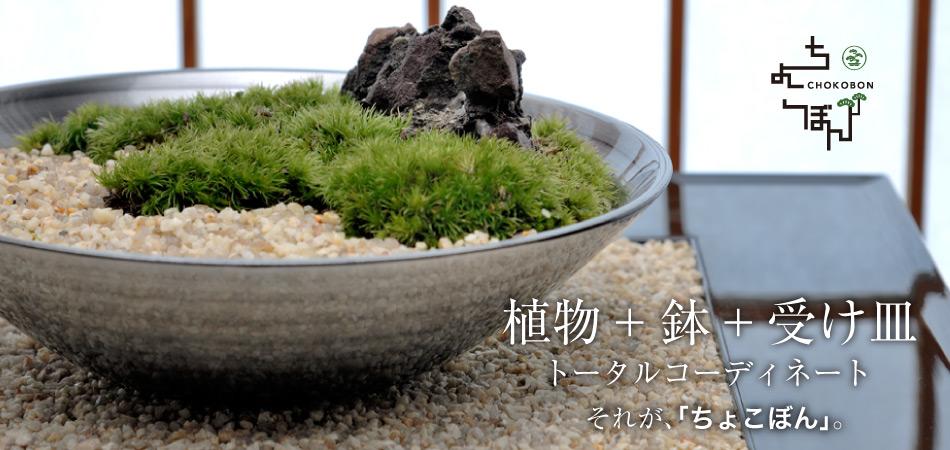 植物+鉢+受け皿。トータルコーディネート。それが、「ちょこぼん」