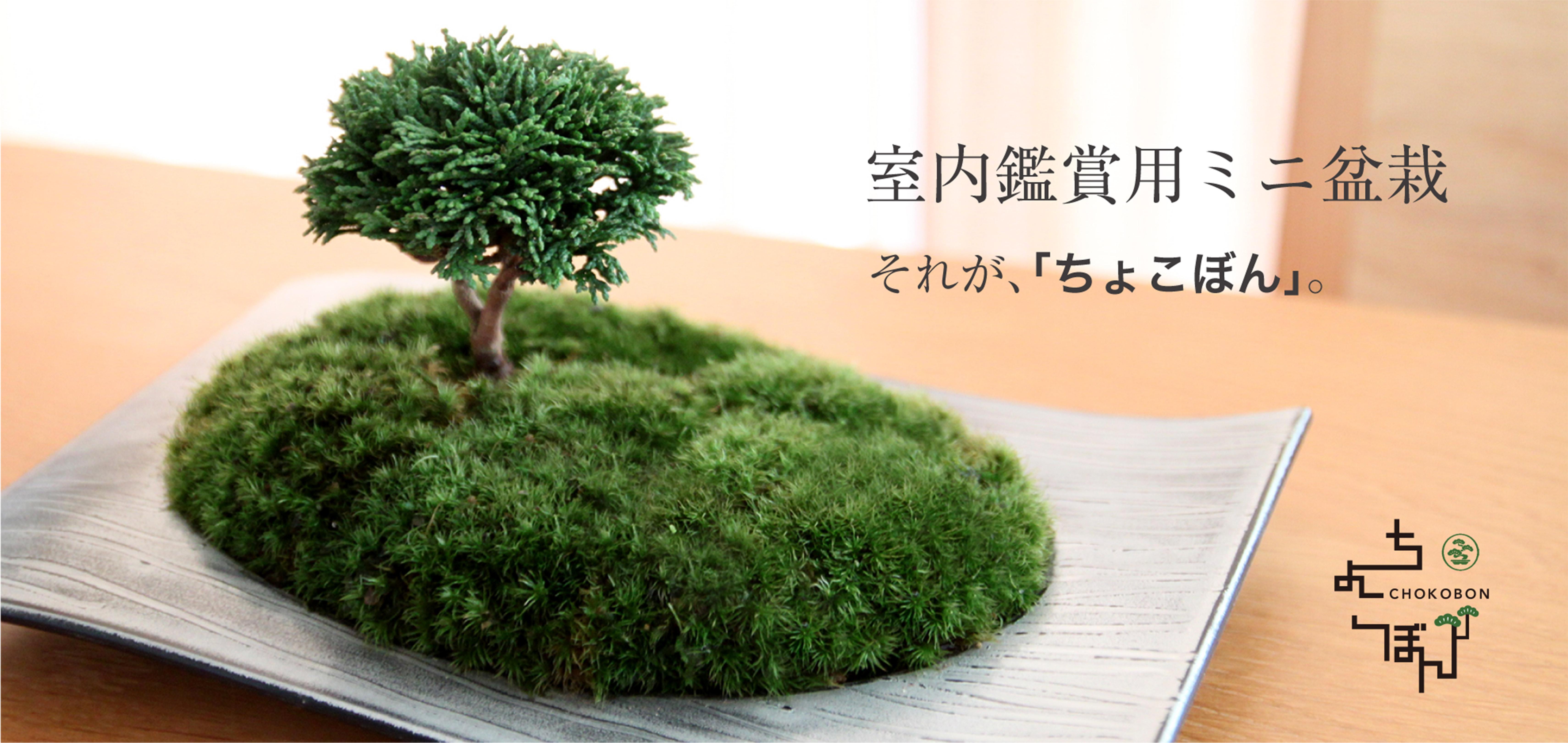 室内観賞用ミニ盆栽。それが、「ちょこぼん」