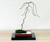 箱庭【大】/枝垂れ桜