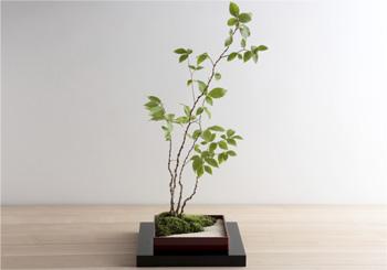 ミニ盆栽ちょこぼん、箱庭