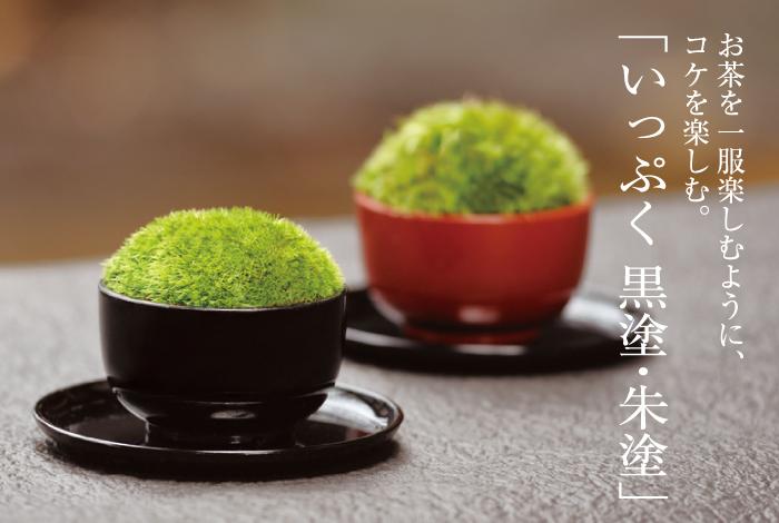 お茶を楽しむように、コケを楽しむ。いっぷく黒塗り・朱塗
