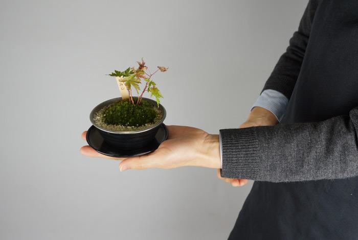 手のりサイズの小庭メタル