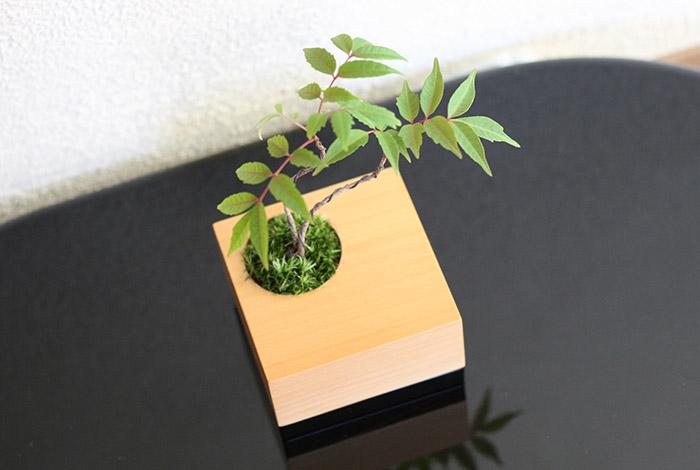 ミニ盆栽×漆器,ちょこぼん,MUKU(ムク),ハゼ