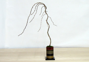 ミニ盆栽ちょこぼん七彩