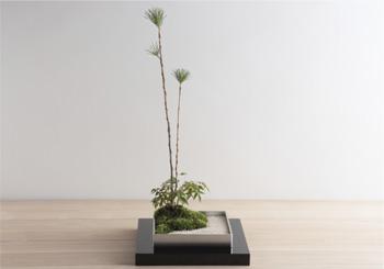 ミニ盆栽ちょこぼんTSUBONIWA(ツボニワ)