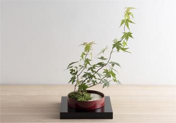 ミニ盆栽ちょこぼん「輪庭」