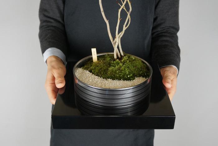 ミニ盆栽ちょこぼんWATOWA(ワトワ)、サイズ参考
