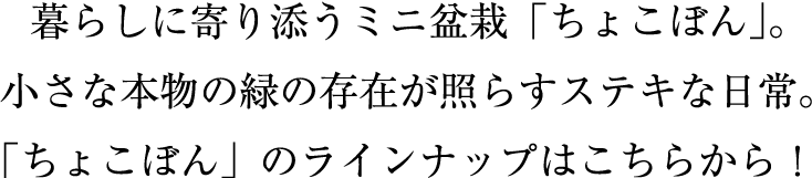 暮らしに寄り添うミニ盆栽「ちょこぼん」のラインナップはこちらから!