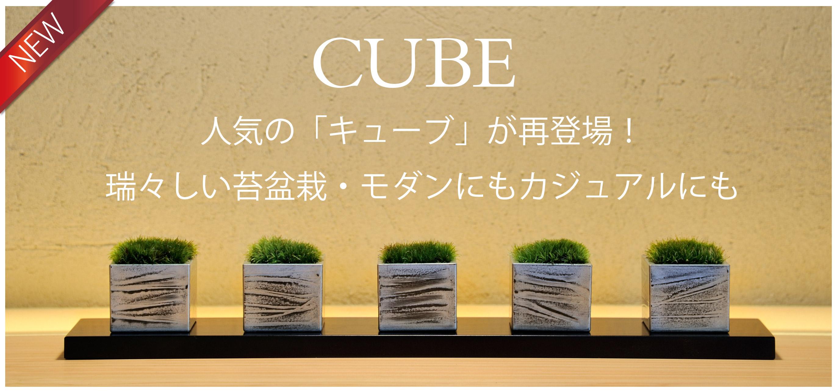 ミニ盆栽,苔,CUBE