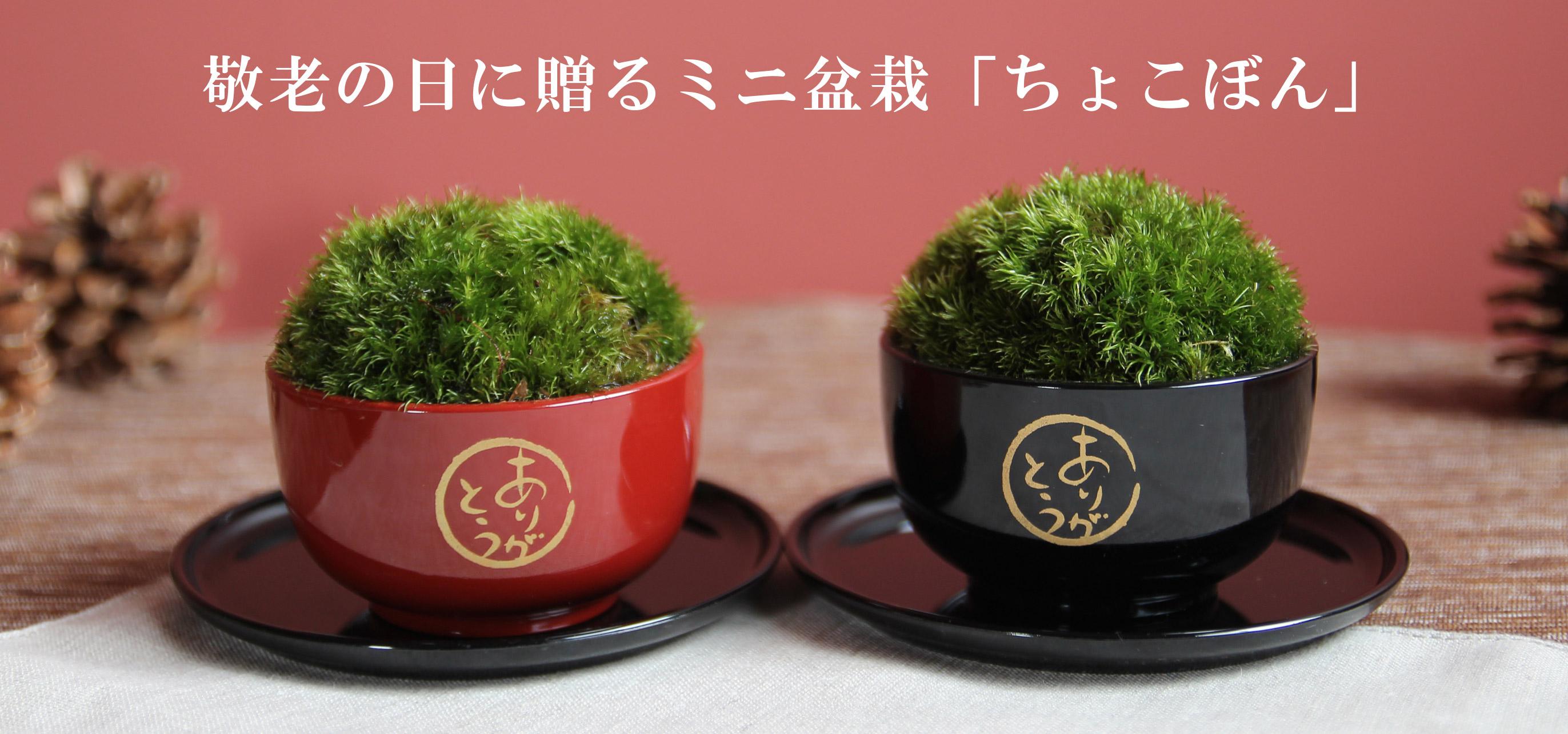 ミニ盆栽,敬老の日,贈り物