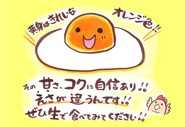 黄身はきれいなオレンジ色!! その甘さ、コクに自信あり!! えさが違うんです!! ぜひ生で食べてみてください!!