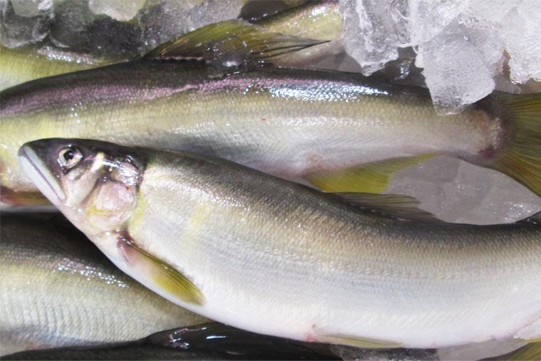 各地の漁業組合と解禁日