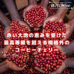 レッドマウンテン AA-TOPは最高等級を超える規格外のコーヒー