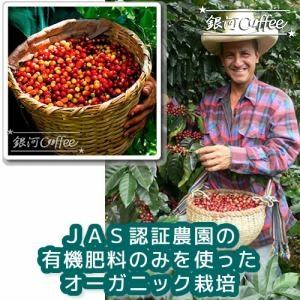 無農薬栽培のコーヒーチェリー