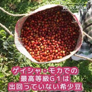 ゲイシャモカ エチオピアのコーヒーチェリー収穫のイメージ