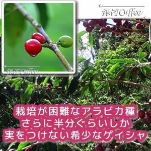 ゲイシャモカ エチオピアG1のアラビカ種コーヒー豆の栽培環境イメージ
