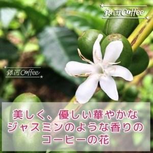 ゲイシャモカ エチオピア コーヒーの花のイメージ