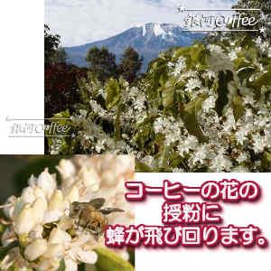 エーデルワイスの花のイメージ