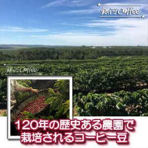 ショコラピーベリー栽培環境のイメージ