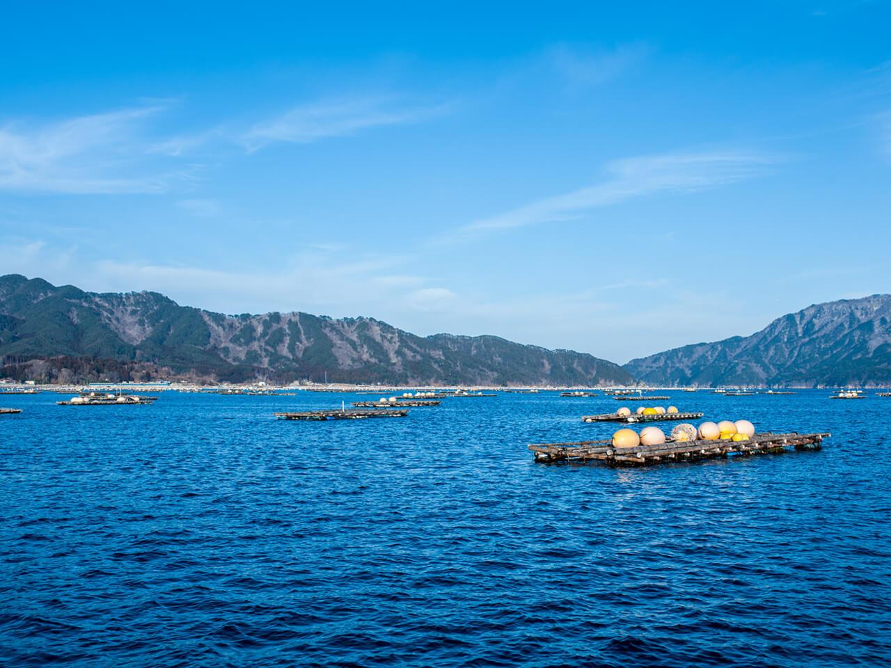 山田湾に浮かぶ養殖筏