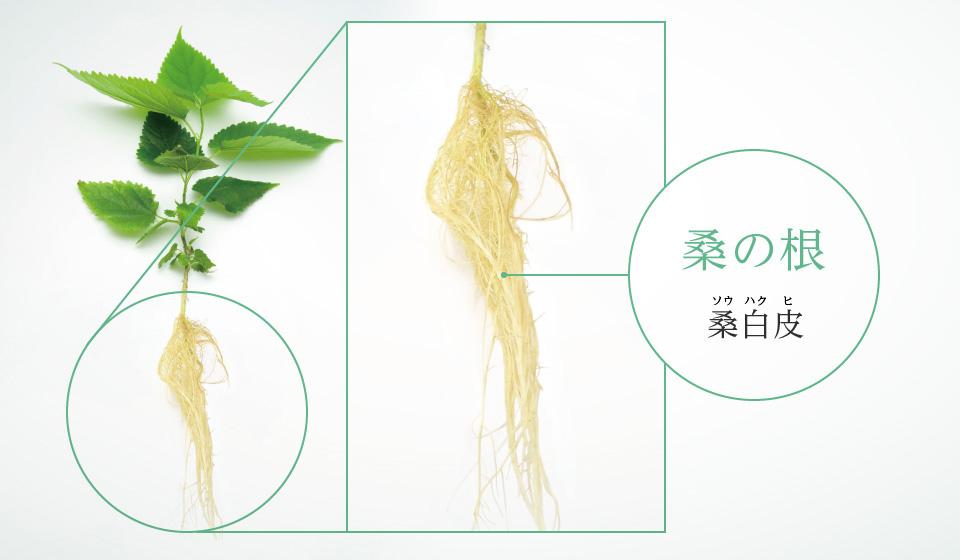 桑の根のチカラを石鹸に。