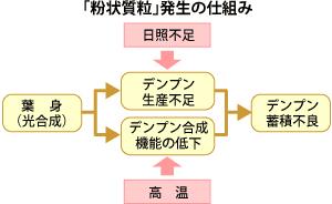 粉状質粒発生の仕組み