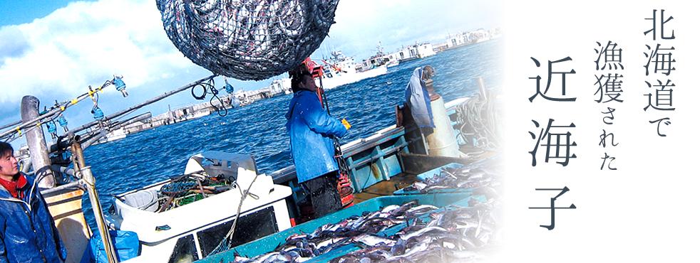 北海道で漁獲された近海子
