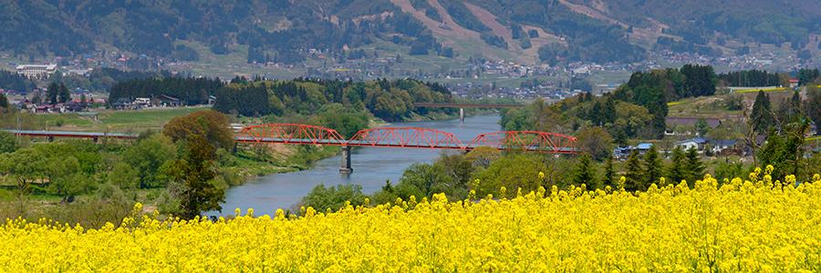 飯山 橋と花畑 写真