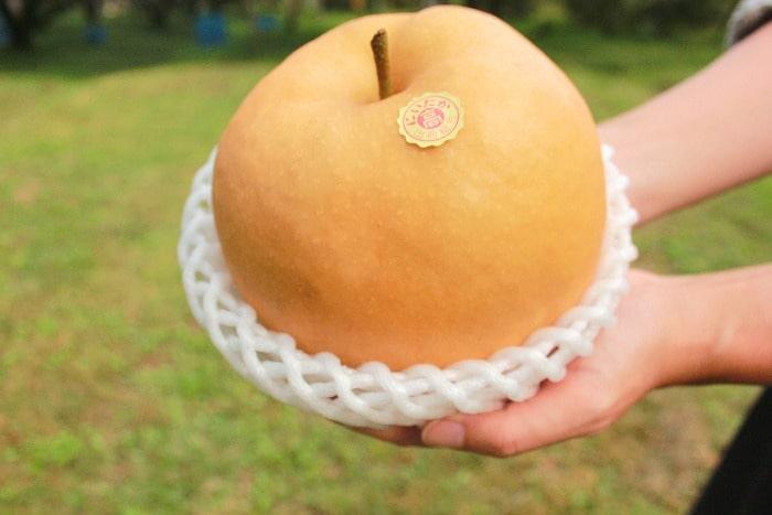 梨を手に持った画像