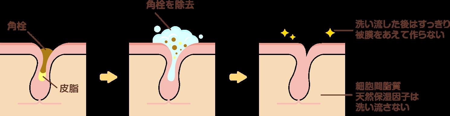 角栓 皮脂 を除去、洗い流した後はすっきり皮膜をあえて作らない。細胞間脂質天然保湿因子は洗い流さない。