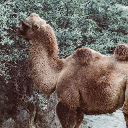 フェアトレードグッズで扱った絶滅危惧種の動物
