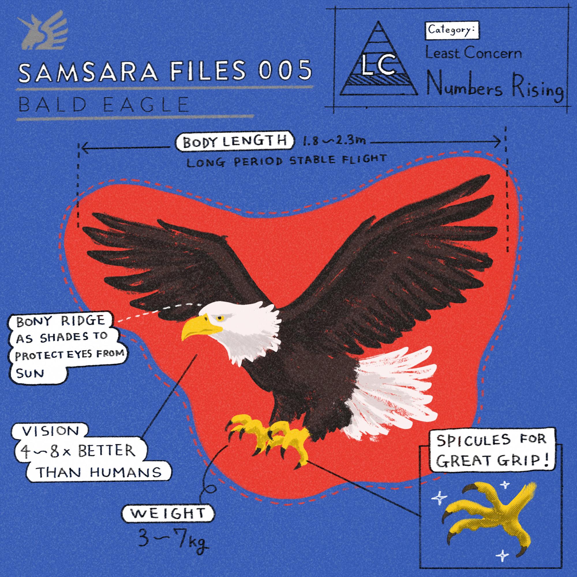 フェアトレードグッズで扱った絶滅危惧種の動物ハクトウワシ