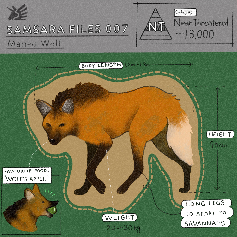 フェアトレードグッズで扱った絶滅危惧種の動物タテガミオオカミ