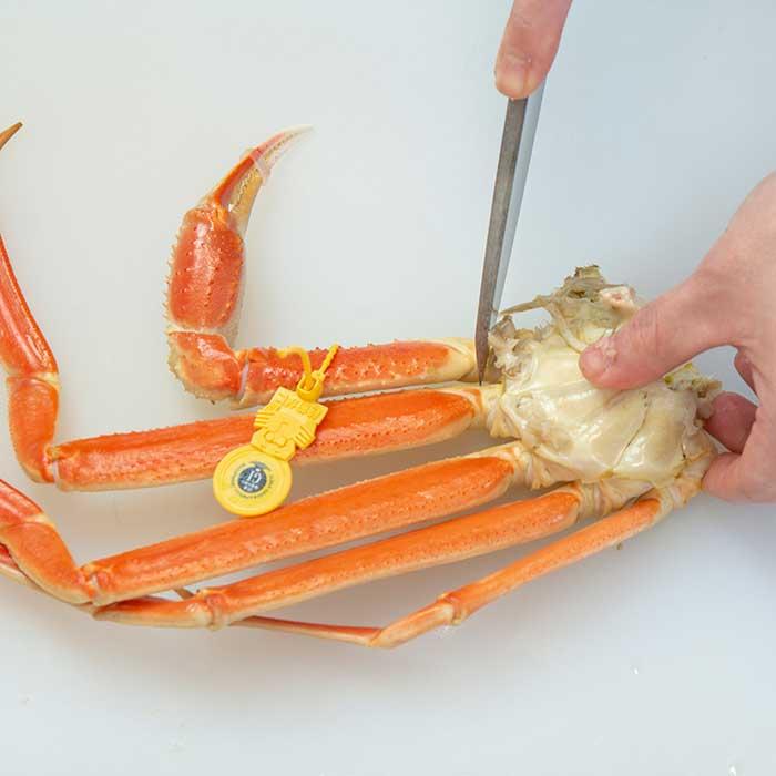 越前蟹を捌く