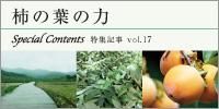 特集17.柿の葉の力