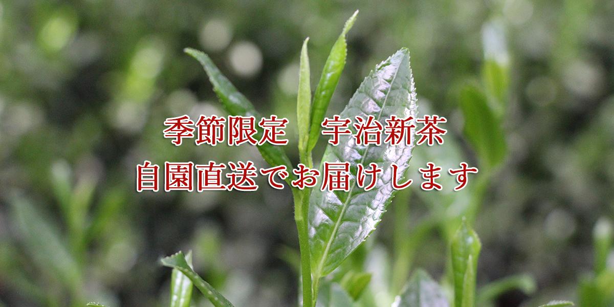shincha_btn