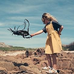 キッズコレクション ガーンジー島 19春コレクション