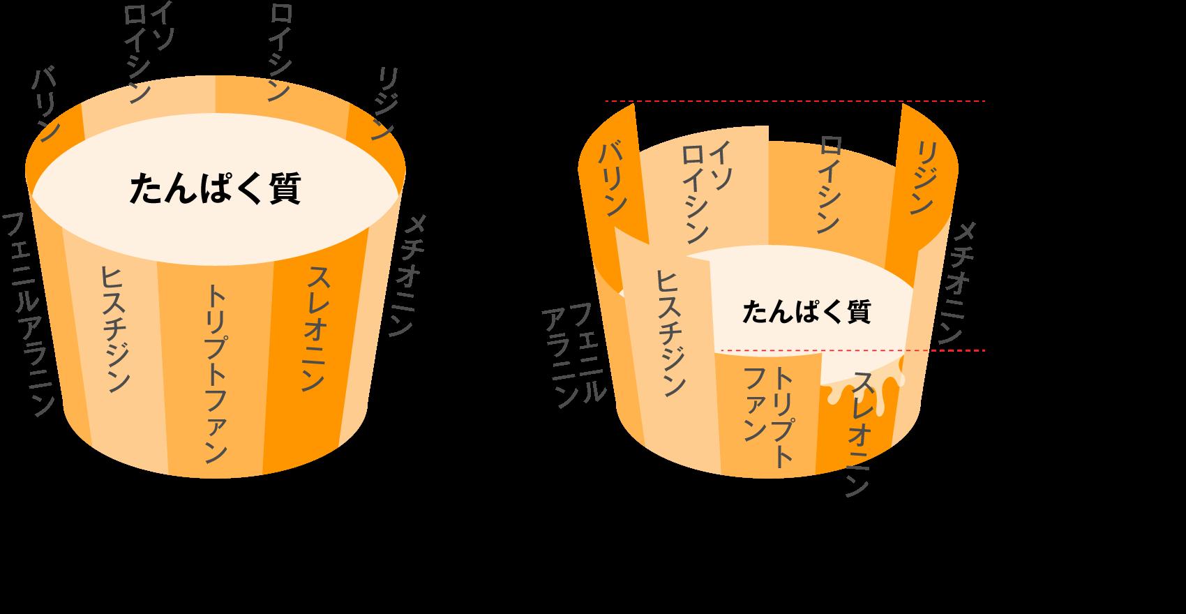 アミノ酸桶理論